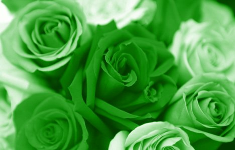 tentang warna hijau
