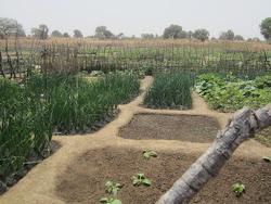 Agor Community Vegetable Garden