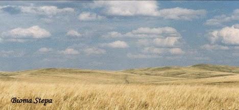 Penjelasan Mengenai Bioma Padang Rumput