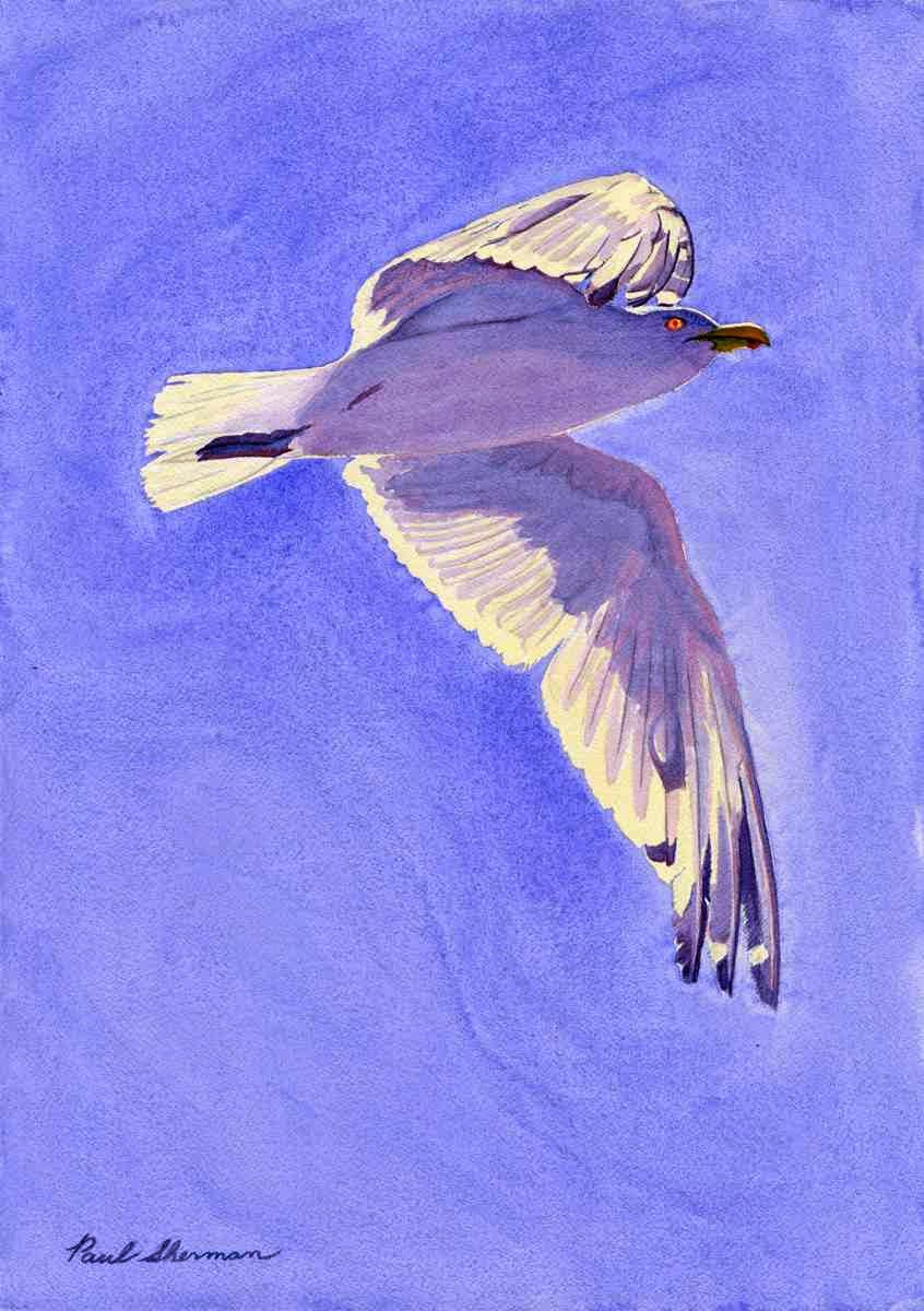 "Seagull Flight - Watercolor 14"" x 20"""