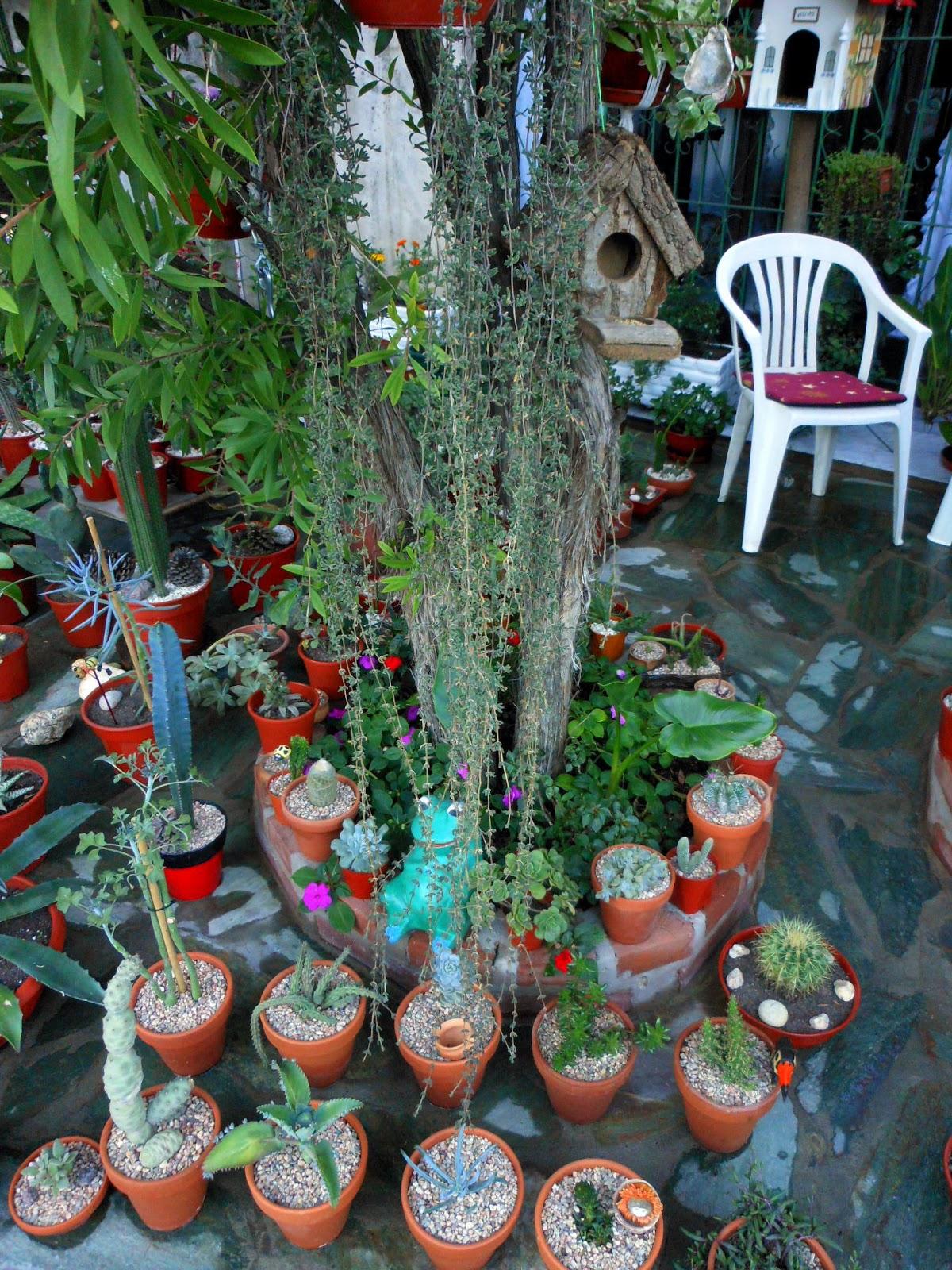 Entre p talos y espinas deco cactus - Jardines con cactus y piedras ...
