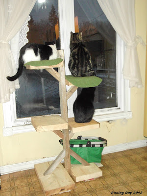 Molly, Winston and Blackie on the cat tree