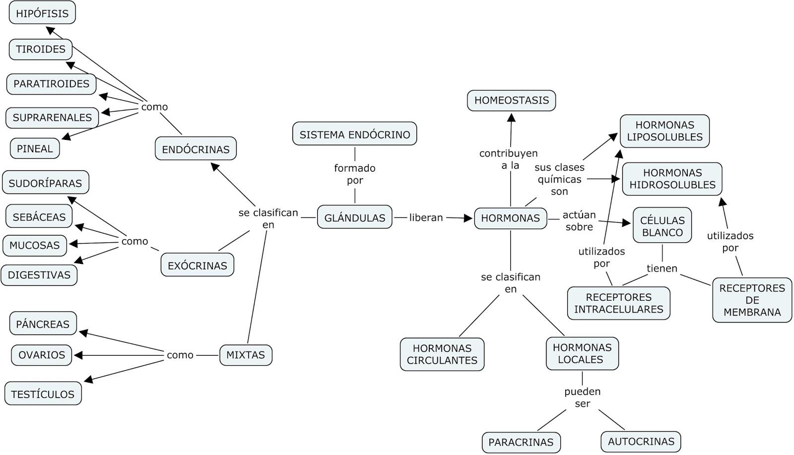 Vistoso Diagrama Del Sistema Endocrino En Blanco Festooning ...