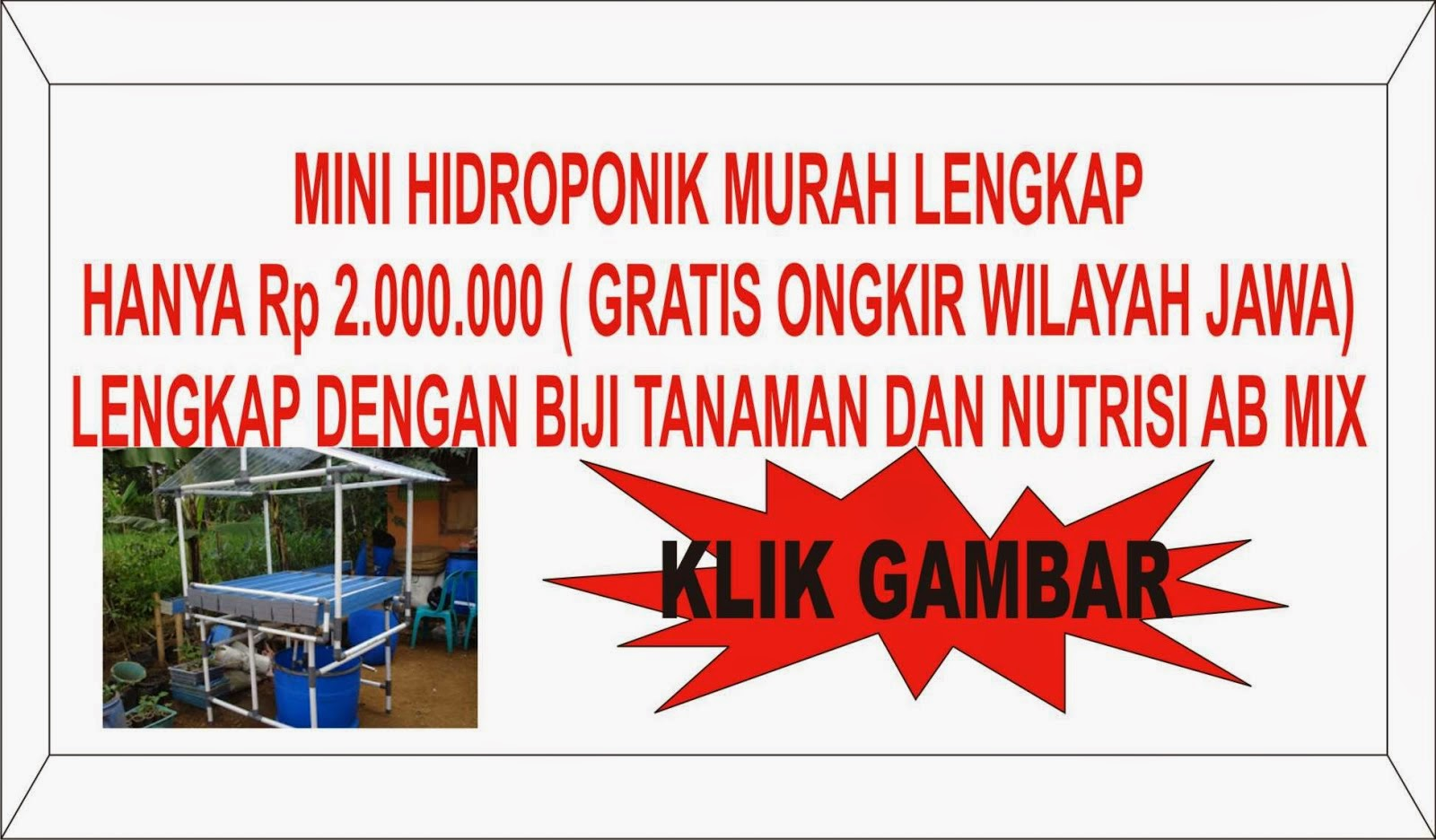 MINI HIDROPONIK Rp 2.000.000