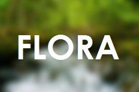 Flora di Indonesia