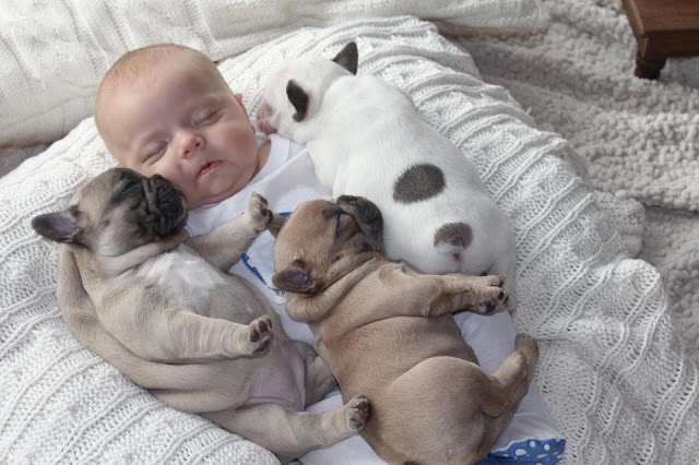 Kids baby pictures: cute baby sleeping with puppies