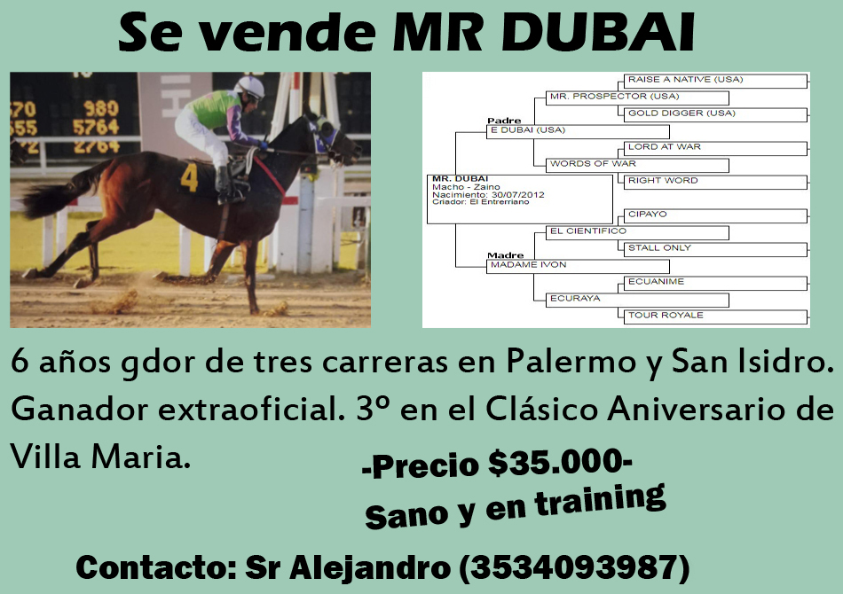 VENTA MR DUBAI