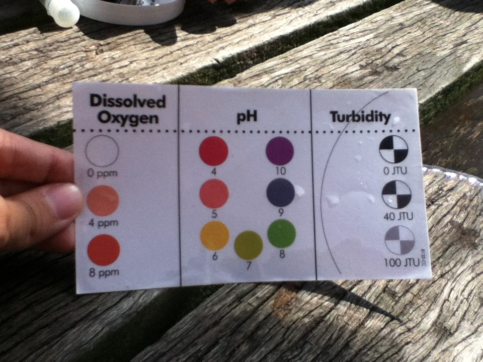 Dissolved Oxygen Color Chart The chart which was used to