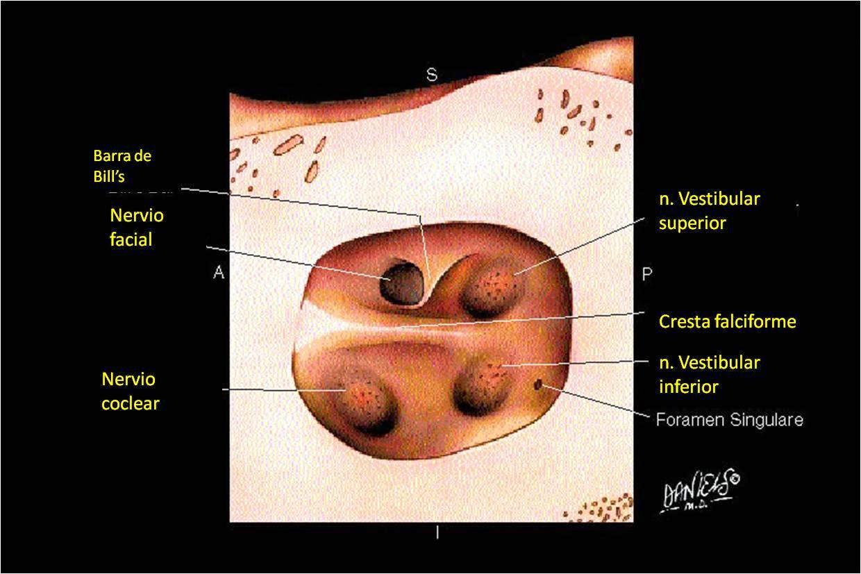 Lujo Anatomía Aplicada Del Nervio Facial Ornamento - Imágenes de ...