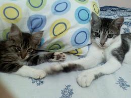 Minhas gatinhas ... Meg e Lili
