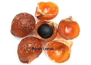 buah lerak bahan sabun alami