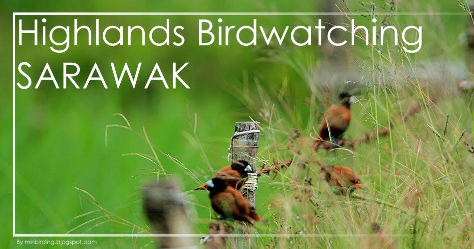Highland Birding Sarawak