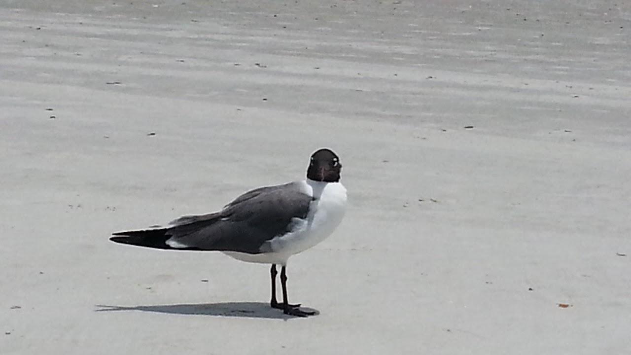 ALM Photo, Lisa Mueller, Jacksonville Beach, beach, pier, seagull