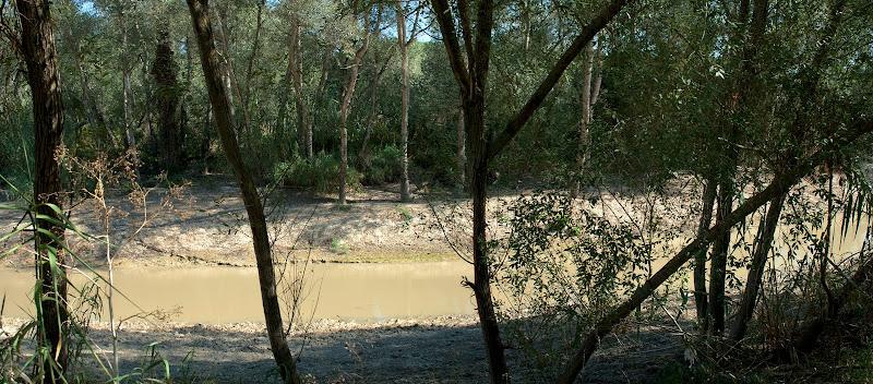 Vegetación en la ribera (septiembre 2011)