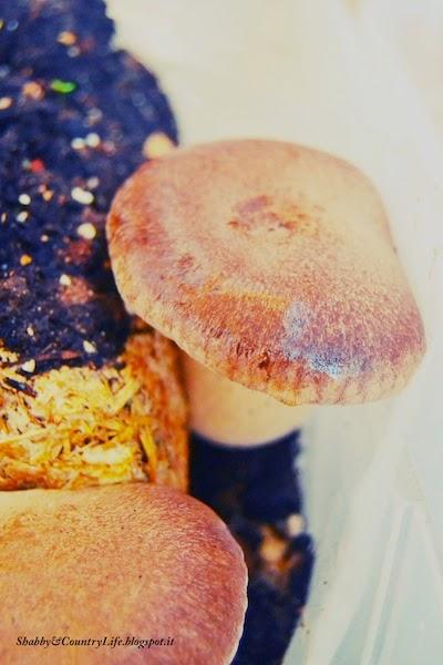 Il bosco a portata di dispensa.. Benvenuto Novembre - shabby&countrylife.blogspot.it