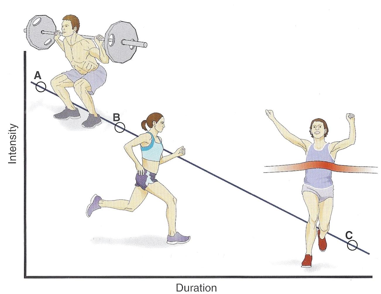 Fitness, Factually.: Exercise Metabolism & Bioenergetics SIMPLIFIED
