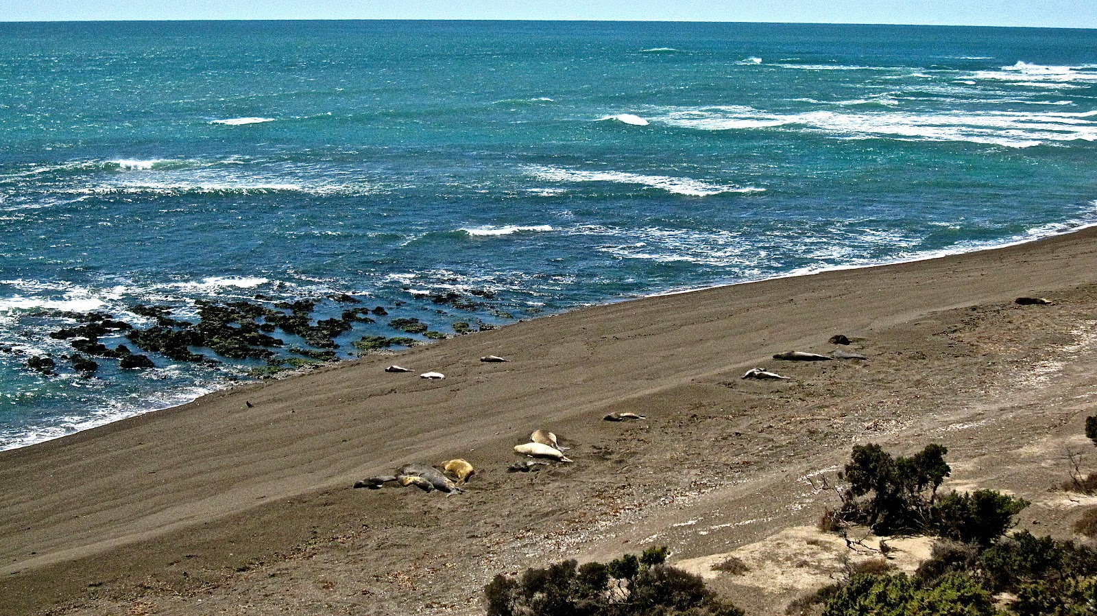 puerto madryn latin singles Puerto madryn hotel territorio by don brasil  aadesa hotels is one of the largest hotel chains in latin america it embeds brands of itself (cyan hotels, don .