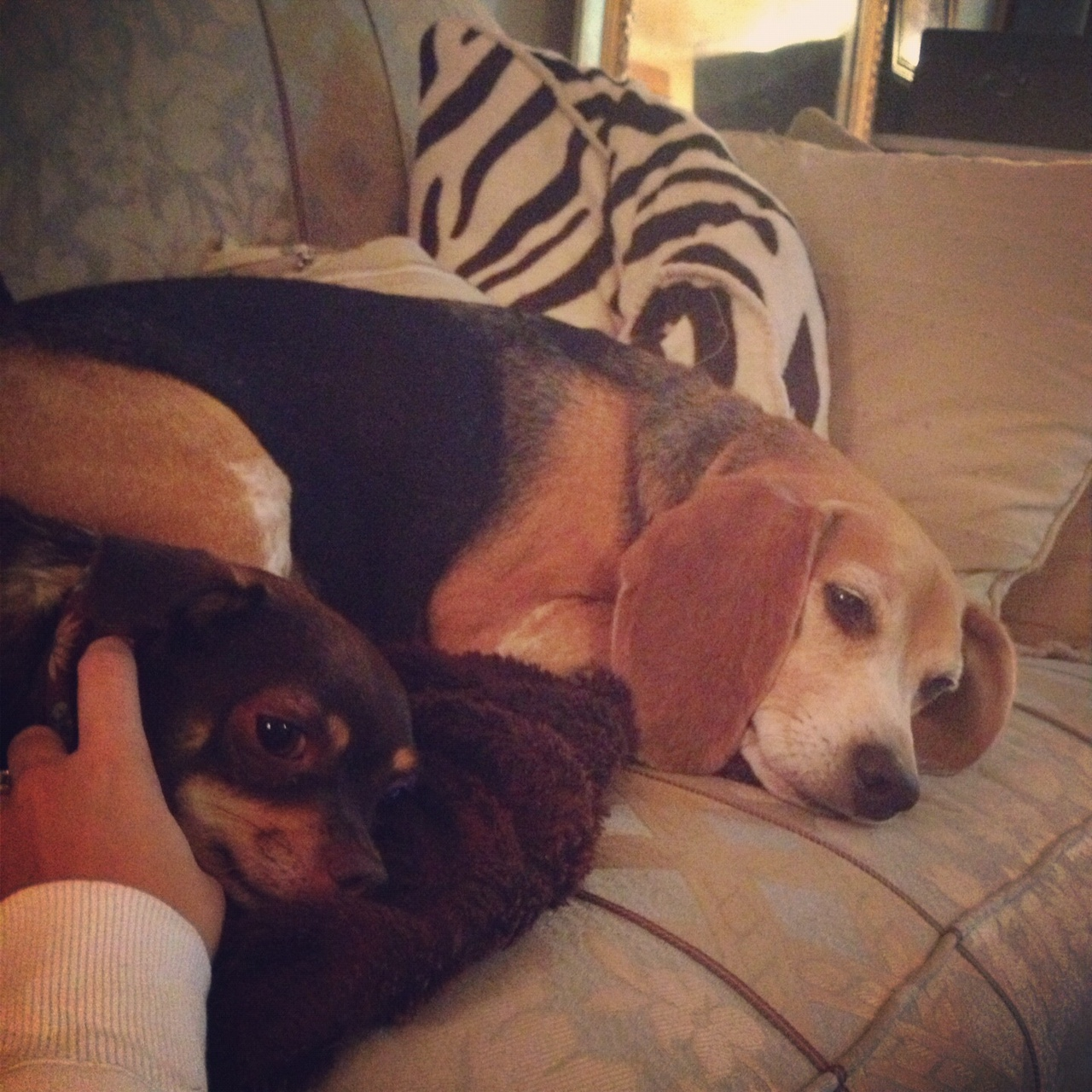 fort fido dog daycare boarding news blog awesome autumn diego pics. Black Bedroom Furniture Sets. Home Design Ideas