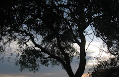 """""""Si sabés que el món s'acaba demà, jo, avui encara, plantaria un arbre"""""""