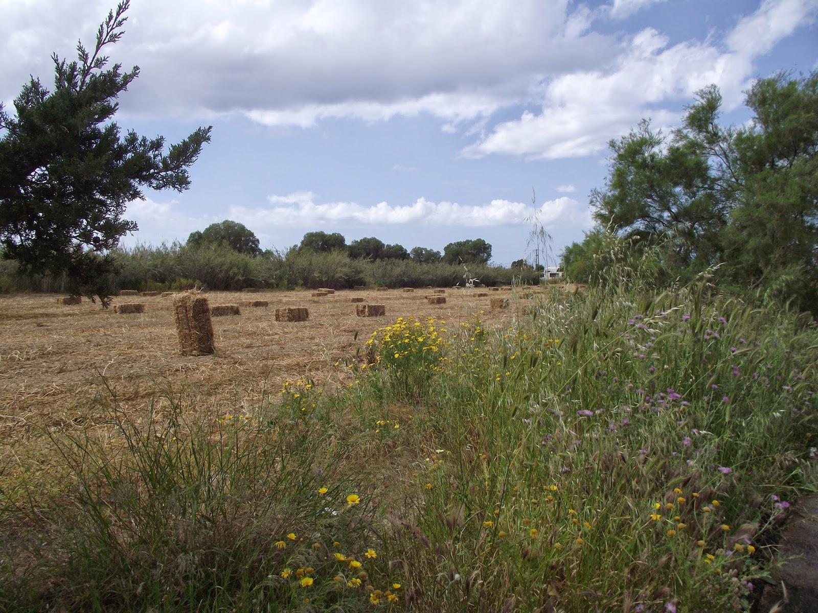 Meadow+300414Karteros.JPG