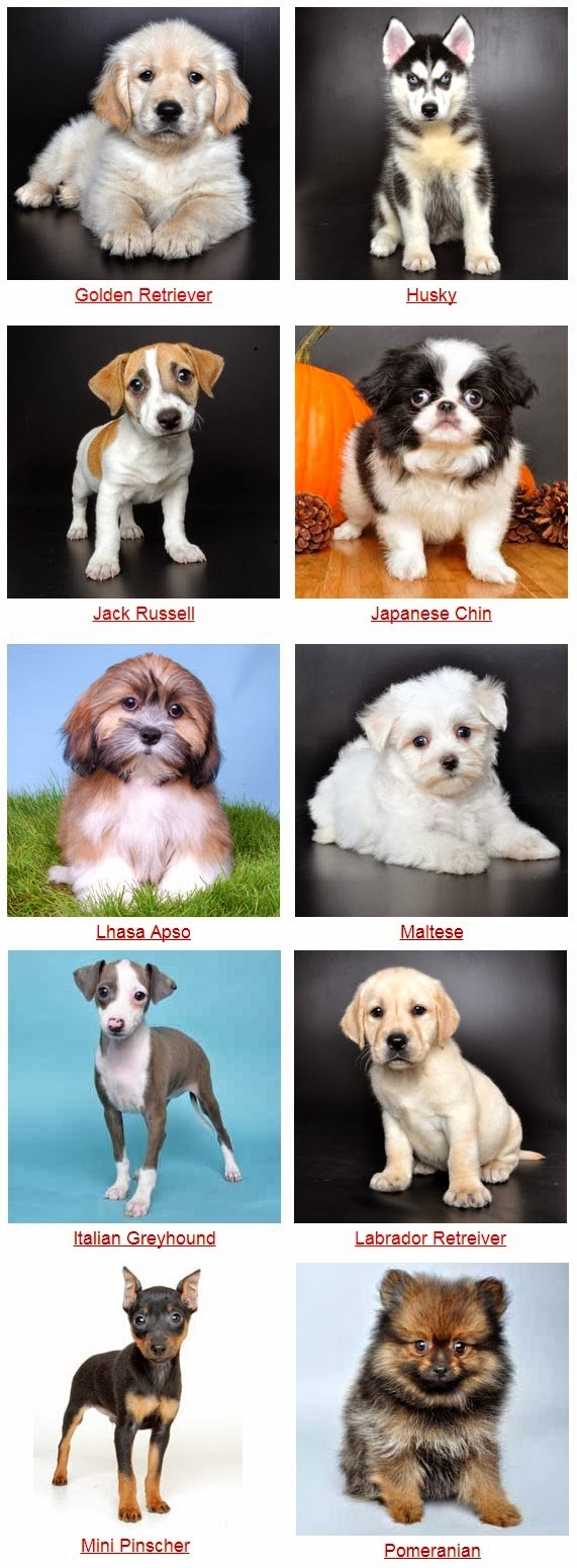 Dog Breeds With Cute Photos