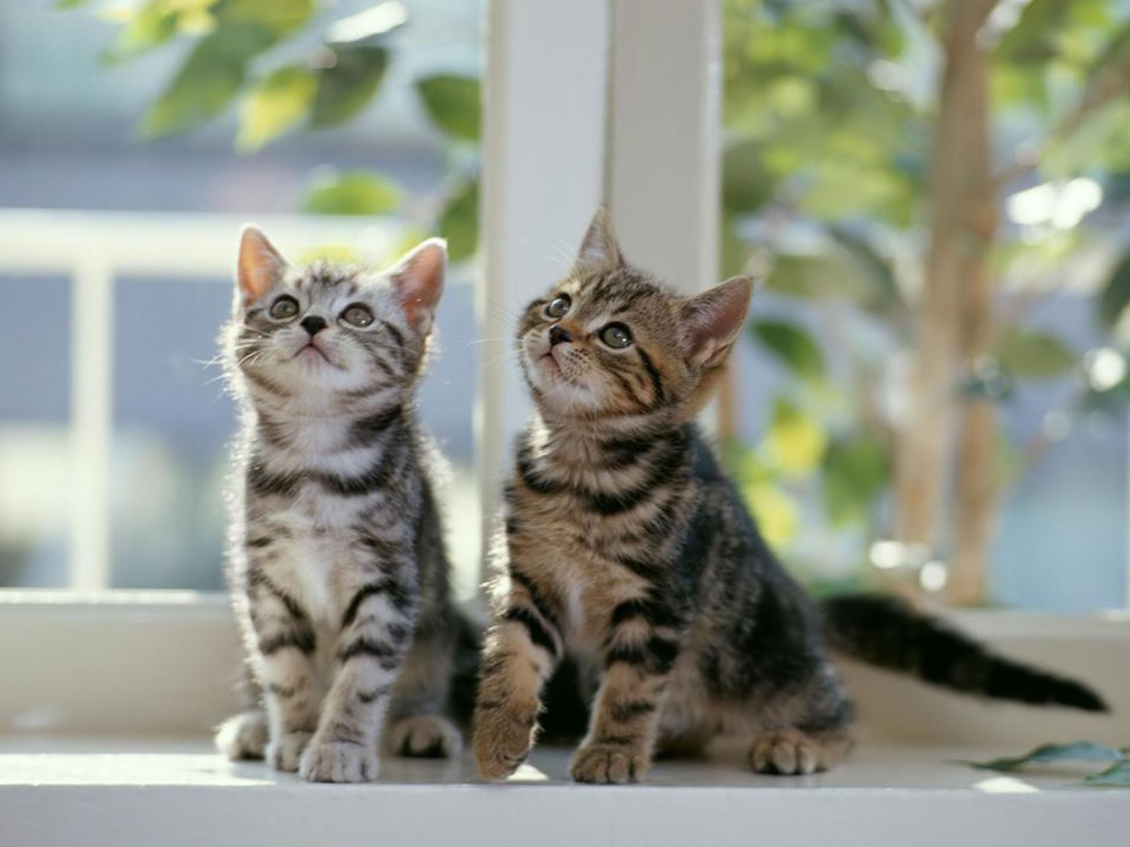 Jezerce... - Page 5 Two+kittens