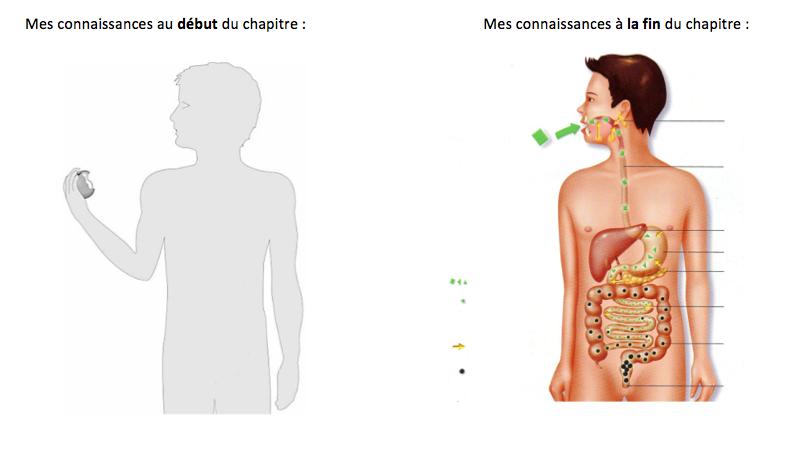 Chapitre 3 : Activité 3 Digestion et Mastication. Etat de ...