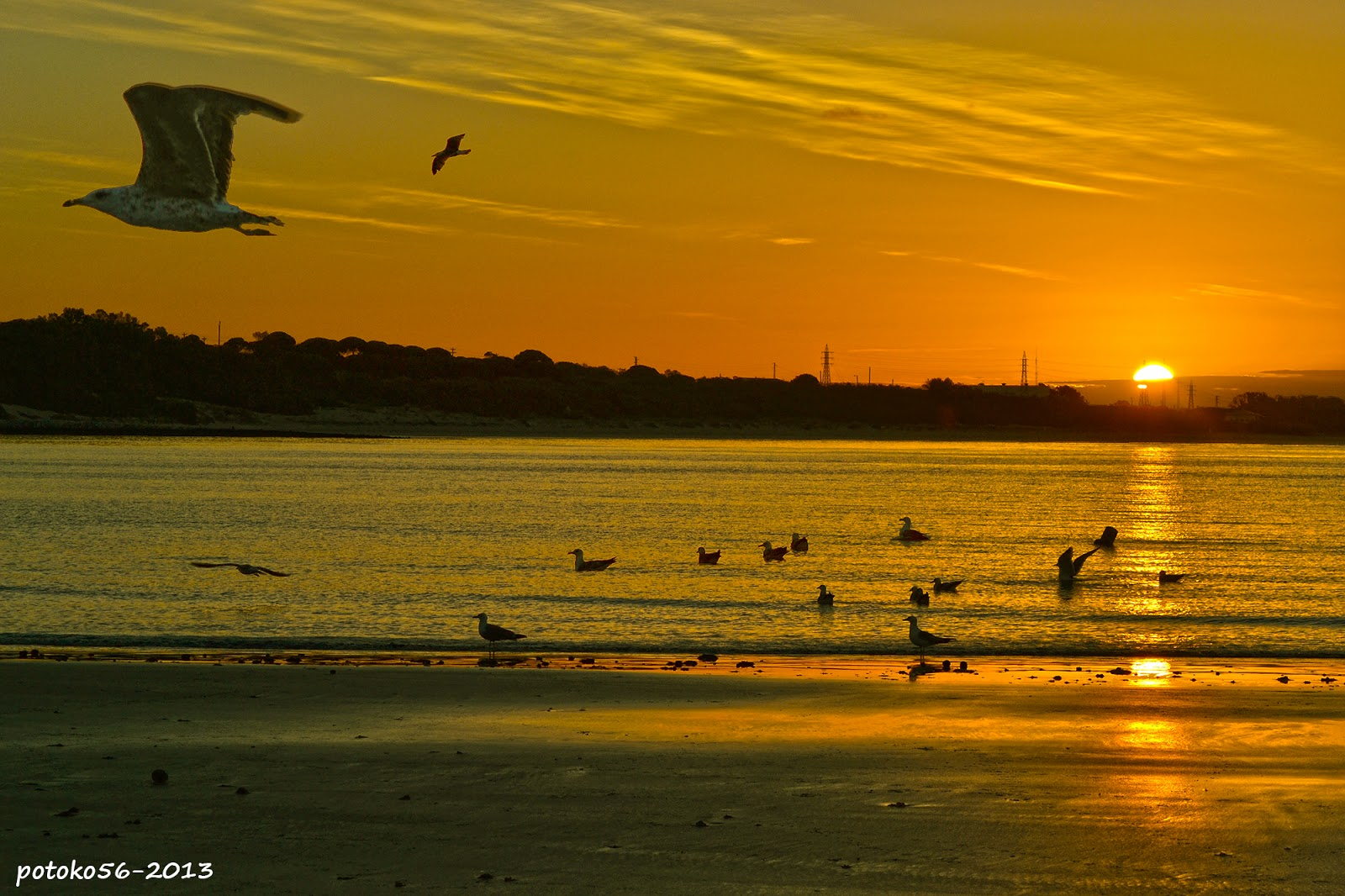 La mañana de hoy en el amanecer con gaviotas