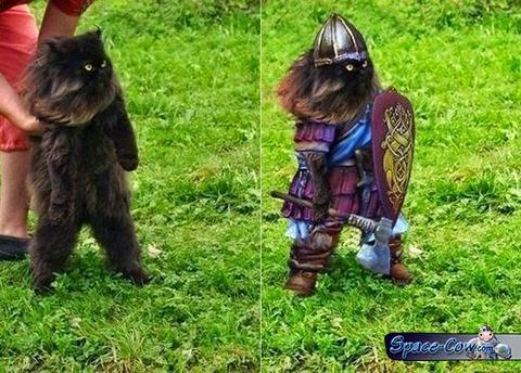 funny cat pictrure humor