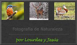 Web de FaunaImagen