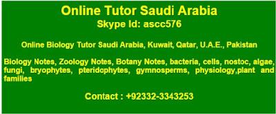 Online Classes IGCSE GCSE Edexcel AQA