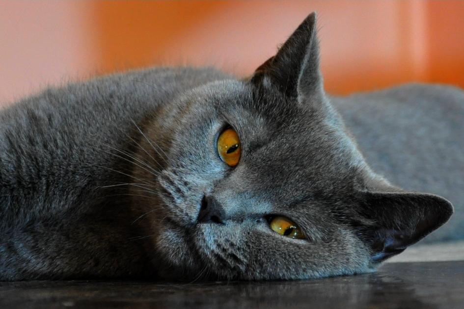 Bezczelne compoundowe koty czyli poranne spotkanie