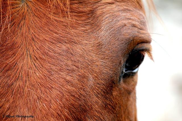 IMAGE: http://2.bp.blogspot.com/-8lulzV4OsVU/UQRdbUp248I/AAAAAAAACiw/diCRG4741q8/s640/Horse+eye+Sig.jpg