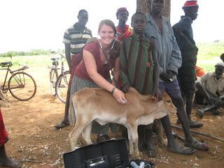 Calf sick with Contagious Bovine Pleural Pneumonia