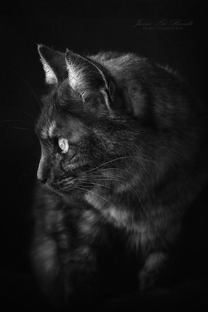 Tierfotografie, Katzenfotografie, Kater Loki