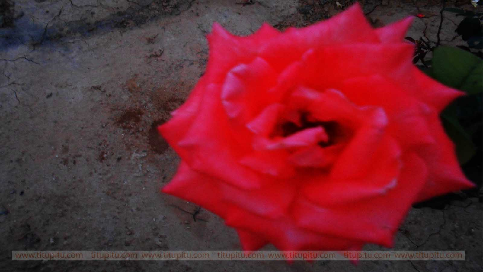 Flowers Images Download Free Hd Wallpapers Of Nature Haryanvi
