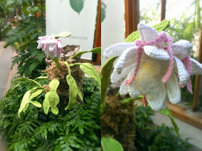 Miss Chaela Boo: Hooked on Plants - crochet Epiphyllum oxypetalum