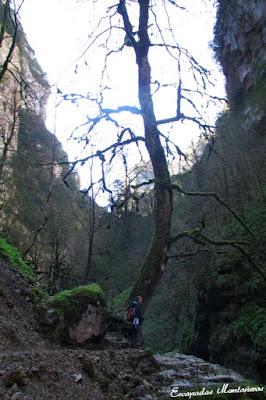 Árbol junto al río en las Gorges de Kakouetta.
