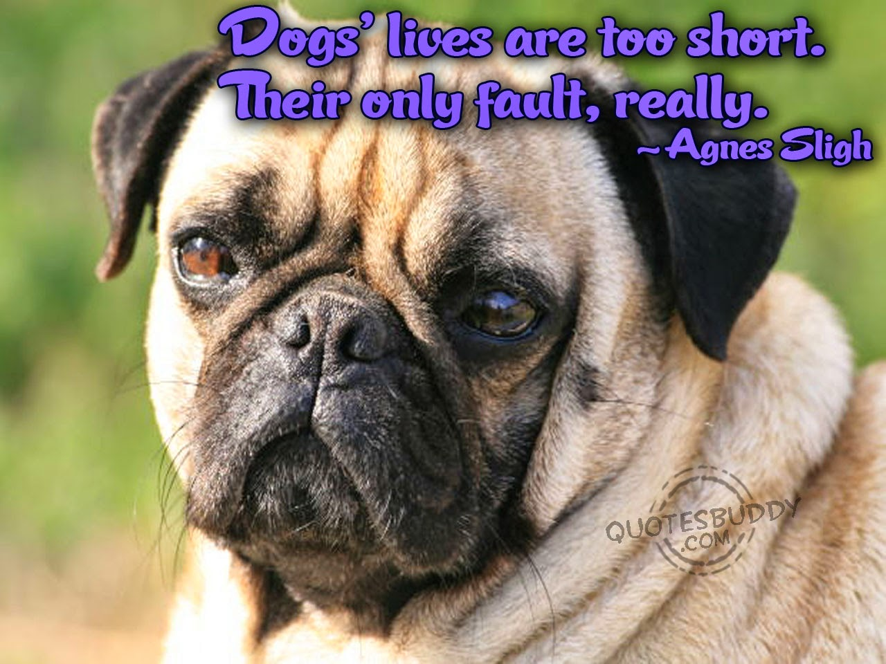 Funny Dogs With Funny Sayings