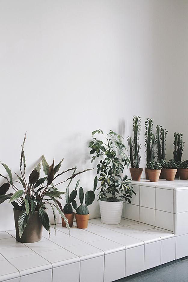 Plantas verdes sobre fondo blanco