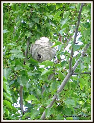 Wasp nest Utah