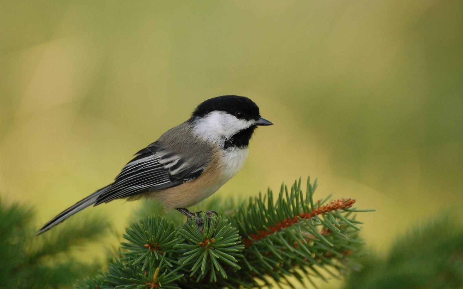 Beautiful Small Birds ...