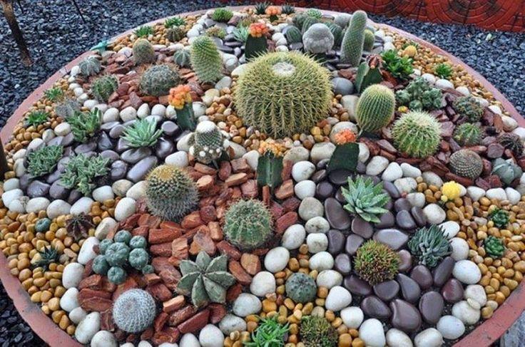 Tipos de Cactus Jardines mini de cactus