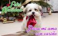 Cachorro con regalo de Navidad junto al arbolito - Postales navideñas para compartir en diciembre