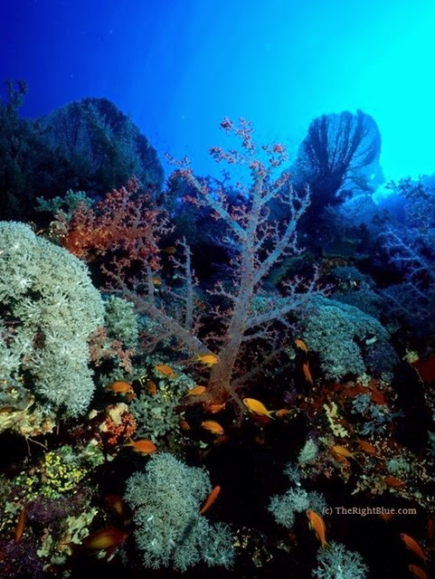 Unspoiled reef, Little Brother Island, Red Sea
