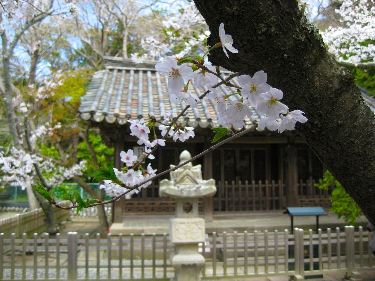 Kirschblüten, Sakura, Kyoto, Japan, Japanreise, Inspiration, Japan, Design, Noriko handmade