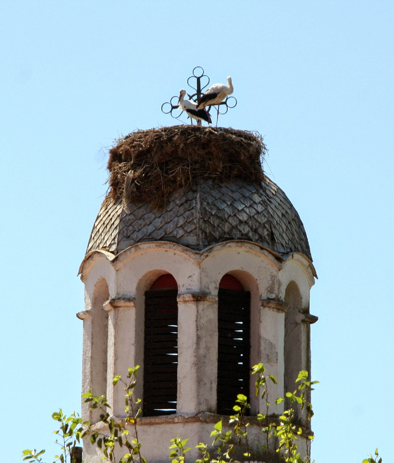 The church storks nest