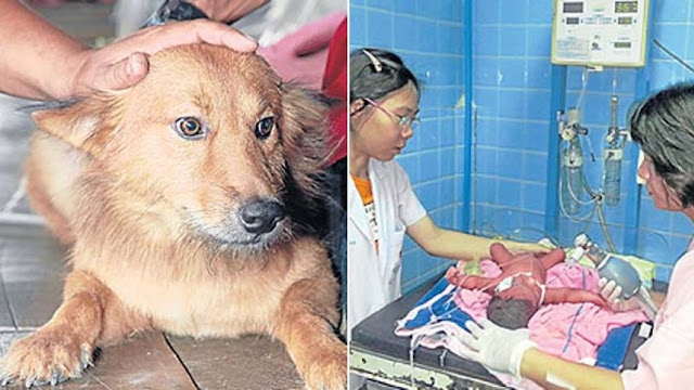 New born Child was abandoned by the mother but a dog sent by angels saved her.