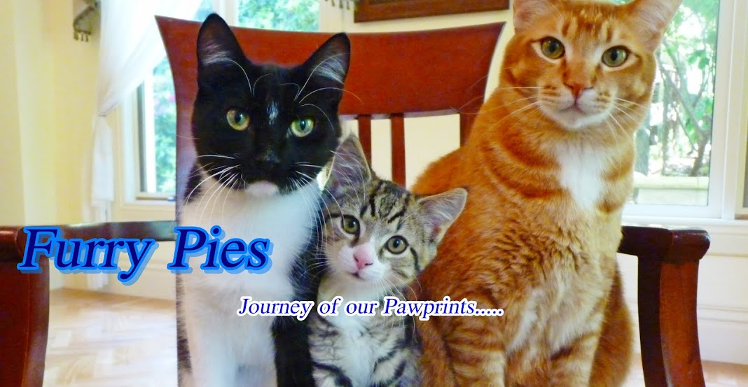 Furry Pies