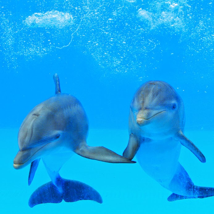 ALERT: CUTE DOLPHINS: dolphins are cute